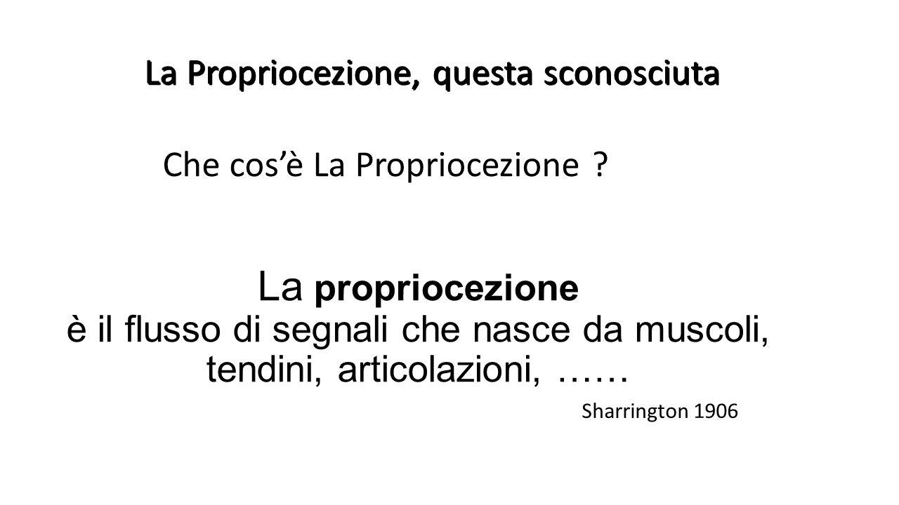 La Propriocezione, questa sconosciuta Che cos'è La Propriocezione ? La propriocezione è il flusso di segnali che nasce da muscoli, tendini, articolazi