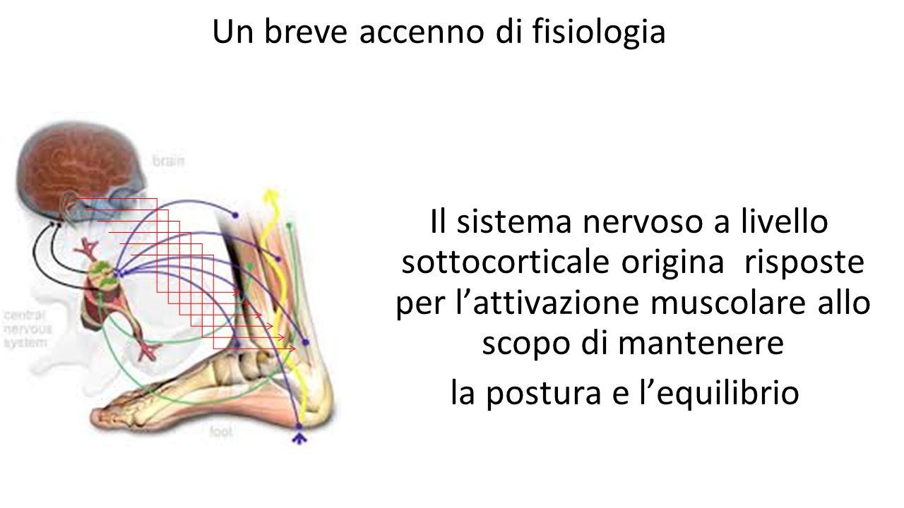 Un breve accenno di fisiologia Il sistema nervoso a livello sottocorticale origina risposte per l'attivazione muscolare allo scopo di mantenere la pos