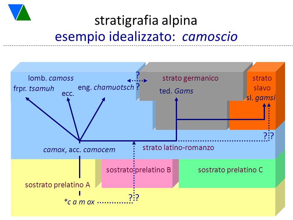 7 esempio idealizzato: camoscio *CAMOX stratigrafia alpina sl. gamsi etc. sostrato prelatino B sostrato prelatino C strato latino-romanzo ? strato sla