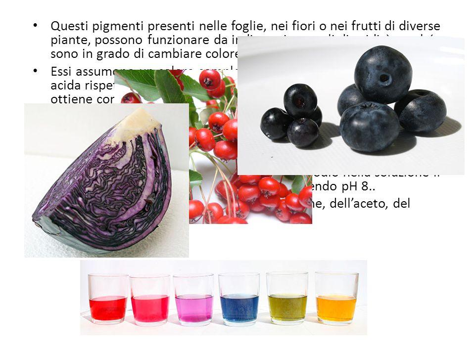 Questi pigmenti presenti nelle foglie, nei fiori o nei frutti di diverse piante, possono funzionare da indicatori naturali di acidità perché sono in g