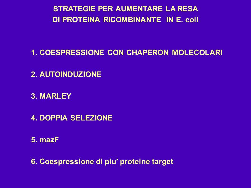 STRATEGIE PER AUMENTARE LA RESA DI PROTEINA RICOMBINANTE IN E. coli 1.COESPRESSIONE CON CHAPERON MOLECOLARI 2.AUTOINDUZIONE 3.MARLEY 4.DOPPIA SELEZION