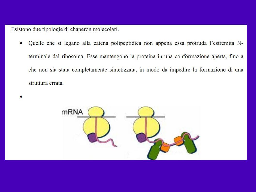 1.COESPRESSIONE CON CHAPERONINE