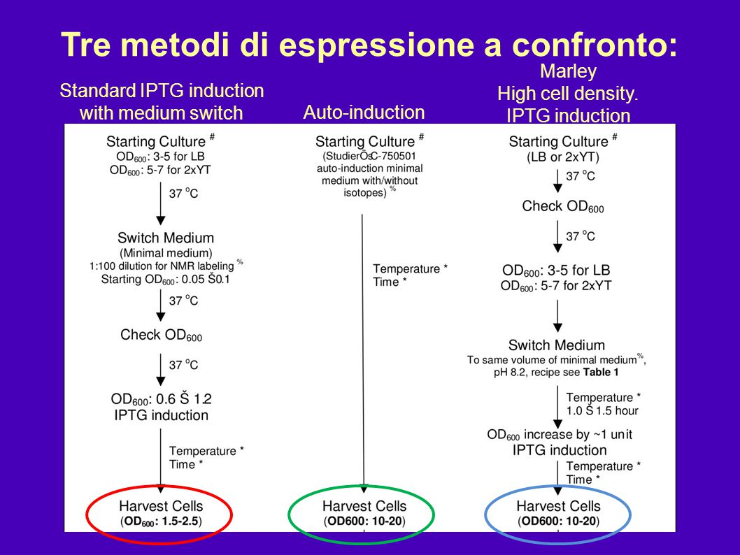 Tre metodi di espressione a confronto: Standard IPTG induction with medium switch Auto-induction Marley High cell density. IPTG induction