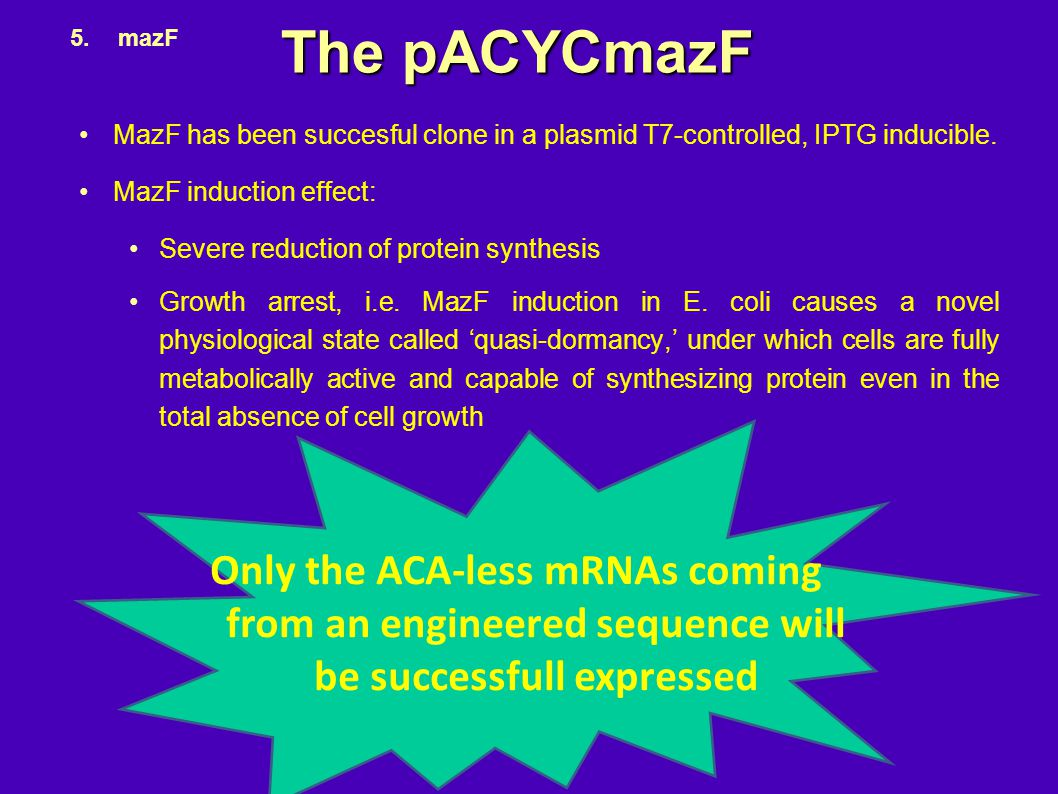 The pACYCmazF MazF has been succesful clone in a plasmid T7-controlled, IPTG inducible. MazF induction effect: Severe reduction of protein synthesis G