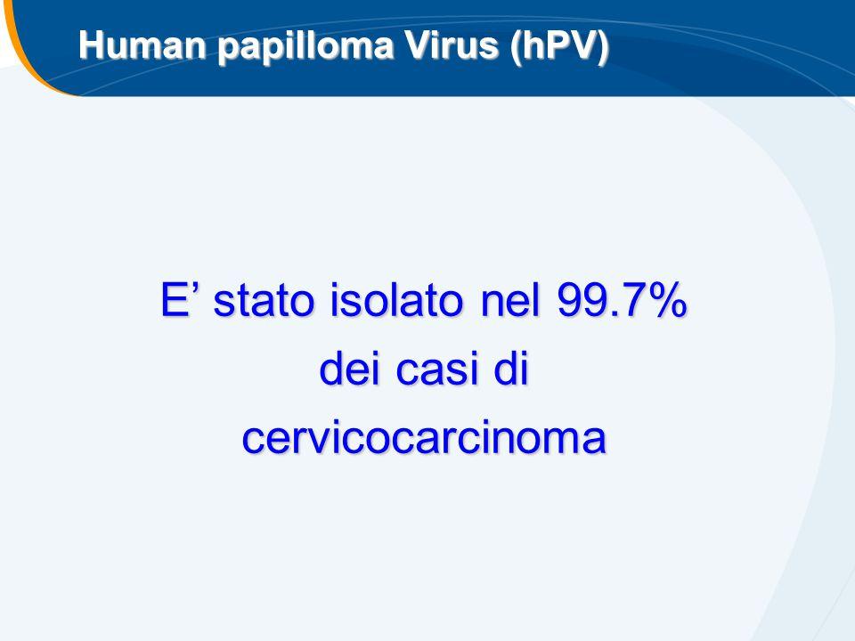 E' stato isolato nel 99.7% dei casi di cervicocarcinoma Human papilloma Virus (hPV)
