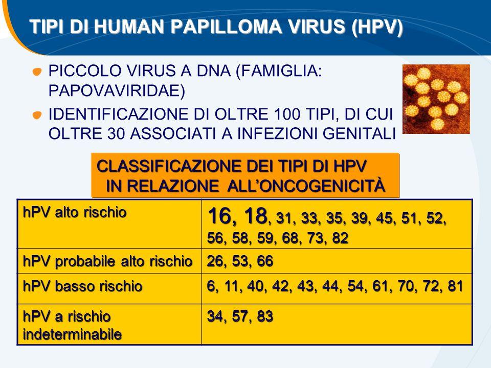 TIPI DI HUMAN PAPILLOMA VIRUS (HPV) PICCOLO VIRUS A DNA (FAMIGLIA: PAPOVAVIRIDAE) IDENTIFICAZIONE DI OLTRE 100 TIPI, DI CUI OLTRE 30 ASSOCIATI A INFEZ