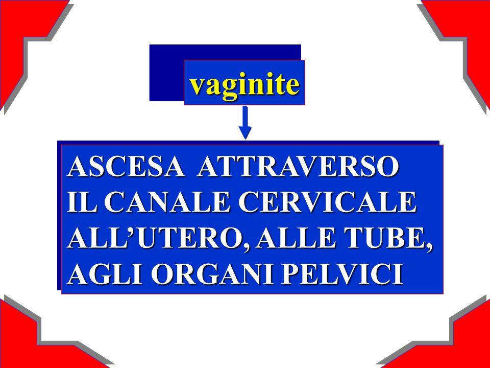 vaginite ASCESA ATTRAVERSO IL CANALE CERVICALE ALL'UTERO, ALLE TUBE, AGLI ORGANI PELVICI ASCESA ATTRAVERSO IL CANALE CERVICALE ALL'UTERO, ALLE TUBE, A