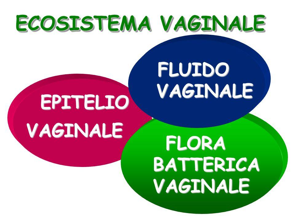EPITELIO EPITELIOVAGINALE FLORA BATTERICA VAGINALE FLORA BATTERICA VAGINALE ECOSISTEMA VAGINALE FLUIDO FLUIDO VAGINALE VAGINALE
