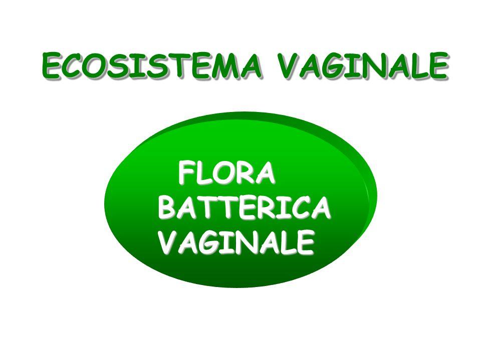 FLORA BATTERICA VAGINALE FLORA BATTERICA VAGINALE ECOSISTEMA VAGINALE