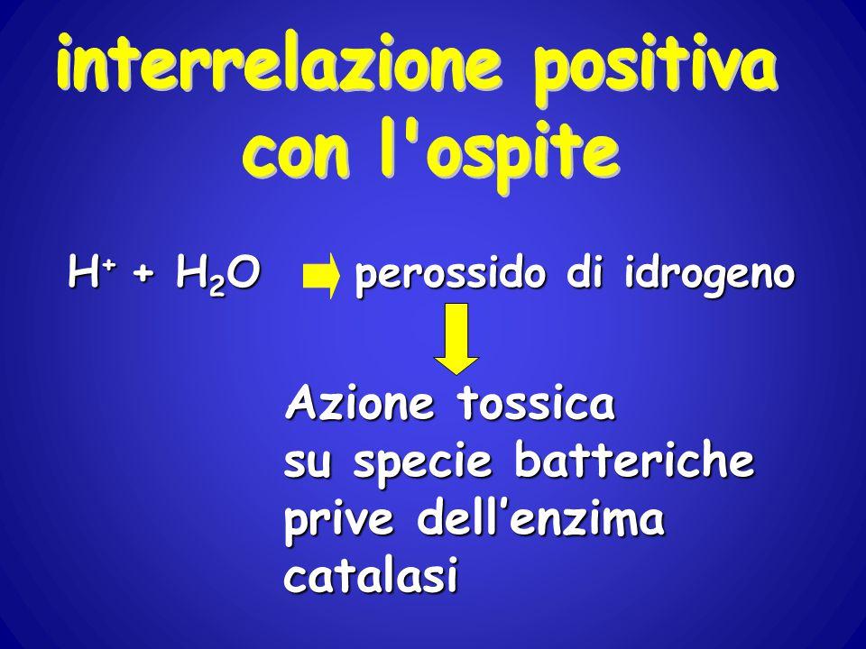 H + + H 2 O perossido di idrogeno Azione tossica su specie batteriche prive dell'enzima catalasi