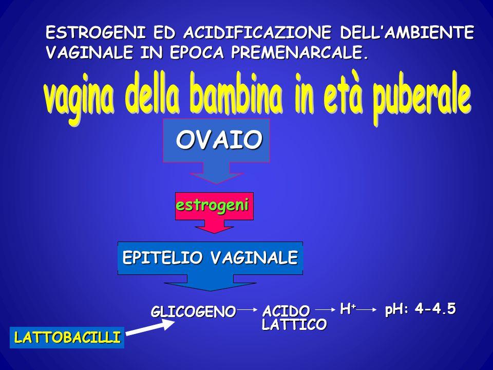 ESTROGENI ED ACIDIFICAZIONE DELL'AMBIENTE VAGINALE IN EPOCA PREMENARCALE. EPITELIO VAGINALE OVAIO estrogeni GLICOGENO LATTOBACILLI ACIDOLATTICO H+H+H+