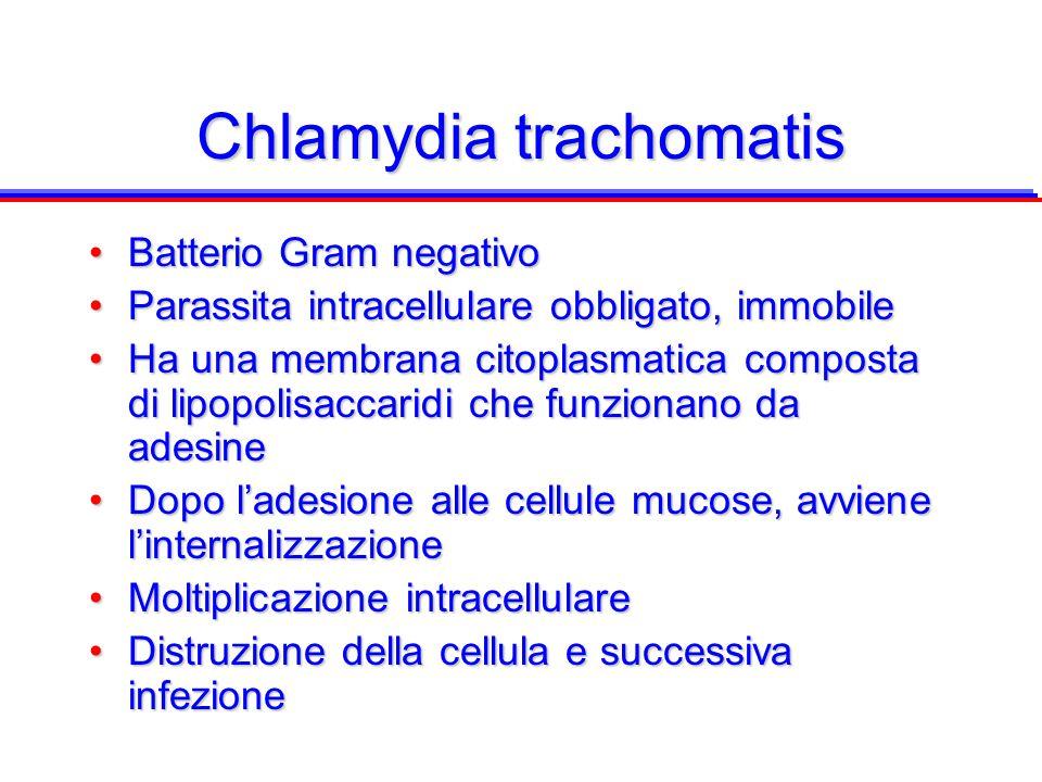 Chlamydia trachomatis Batterio Gram negativoBatterio Gram negativo Parassita intracellulare obbligato, immobileParassita intracellulare obbligato, imm
