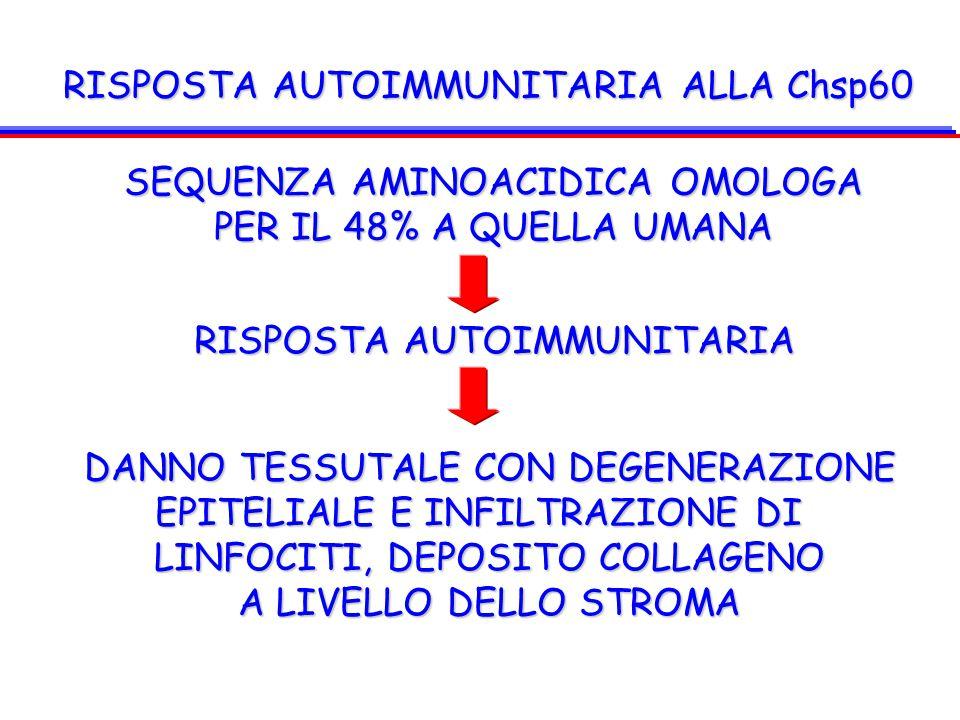 RISPOSTA AUTOIMMUNITARIA ALLA Chsp60 SEQUENZA AMINOACIDICA OMOLOGA PER IL 48% A QUELLA UMANA RISPOSTA AUTOIMMUNITARIA DANNO TESSUTALE CON DEGENERAZION
