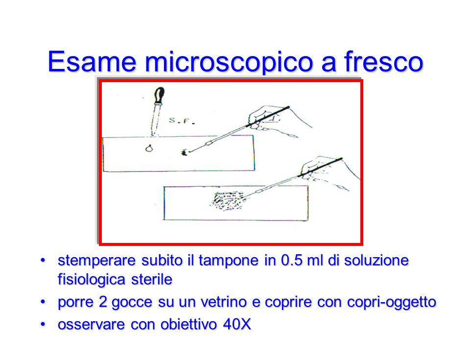 Esame microscopico a fresco stemperare subito il tampone in 0.5 ml di soluzione fisiologica sterilestemperare subito il tampone in 0.5 ml di soluzione