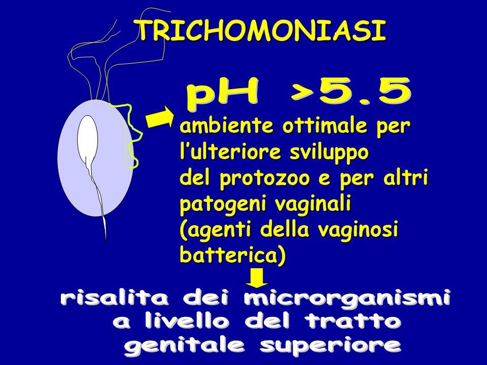 TRICHOMONIASI ambiente ottimale per l'ulteriore sviluppo del protozoo e per altri patogeni vaginali (agenti della vaginosi batterica)