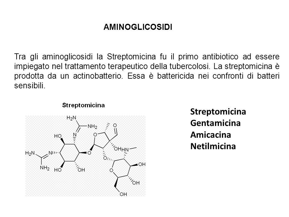 AMINOGLICOSIDI Tra gli aminoglicosidi la Streptomicina fu il primo antibiotico ad essere impiegato nel trattamento terapeutico della tubercolosi. La s