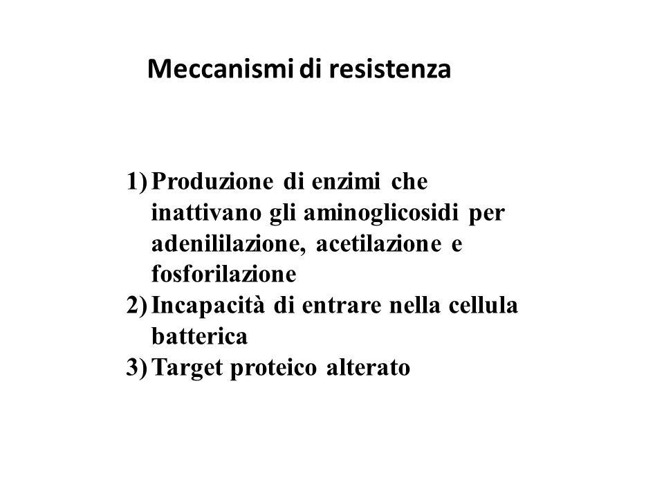Meccanismi di resistenza 1)Produzione di enzimi che inattivano gli aminoglicosidi per adenililazione, acetilazione e fosforilazione 2)Incapacità di en