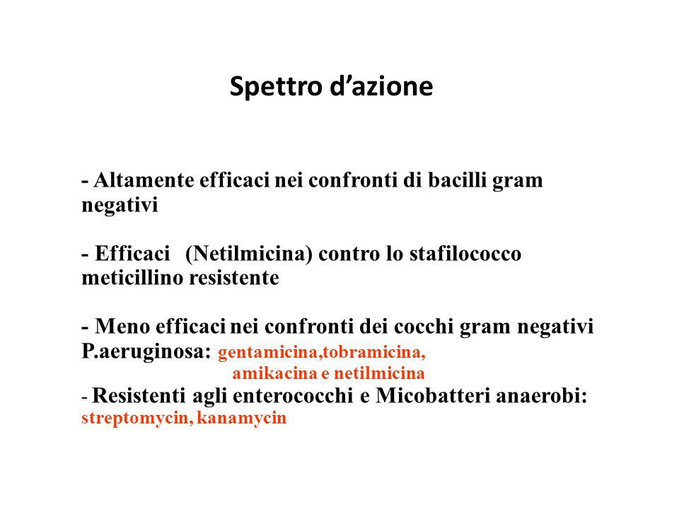 Spettro d'azione - Altamente efficaci nei confronti di bacilli gram negativi - Efficaci (Netilmicina) contro lo stafilococco meticillino resistente -