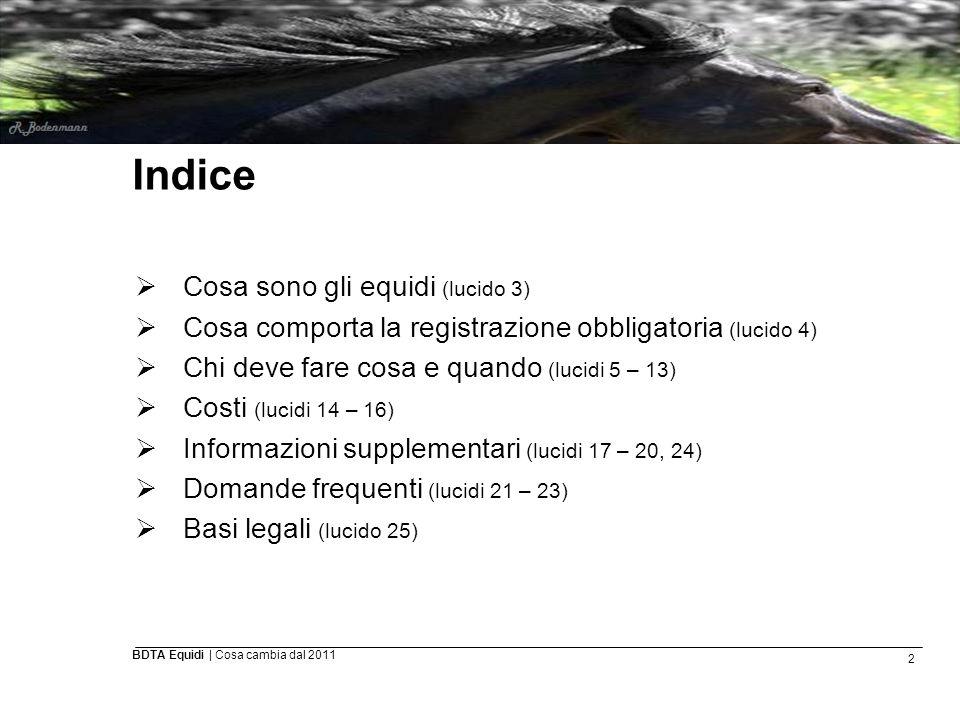 13 BDTA Equidi | Cosa cambia dal 2011 Altri eventi assoggettati all obbligo di notifica (2)  Importazione: notifica da parte del proprietario entro 30 giorni, se l animale resta almeno 30 giorni in Svizzera.