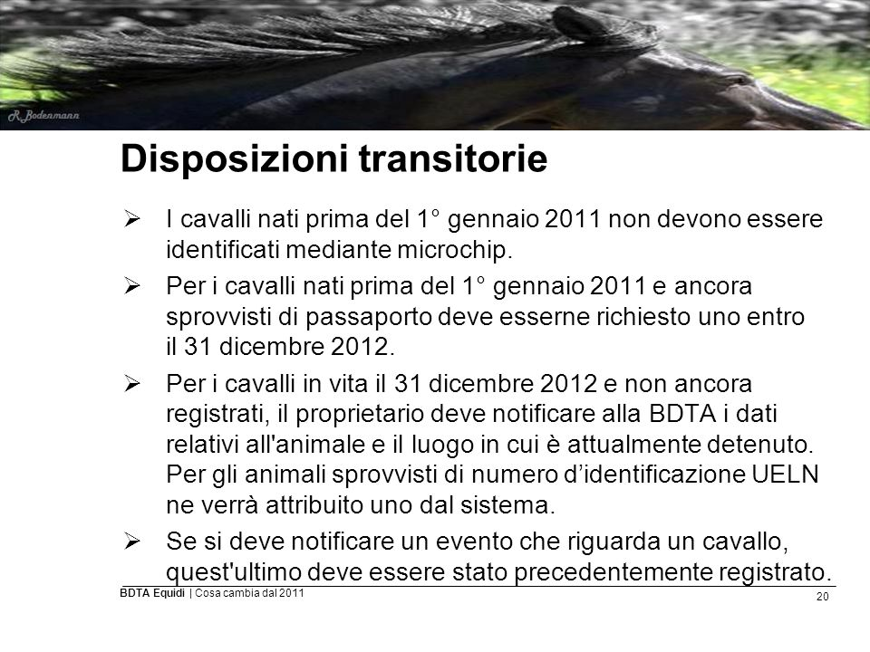 20 BDTA Equidi | Cosa cambia dal 2011 Disposizioni transitorie  I cavalli nati prima del 1° gennaio 2011 non devono essere identificati mediante micr