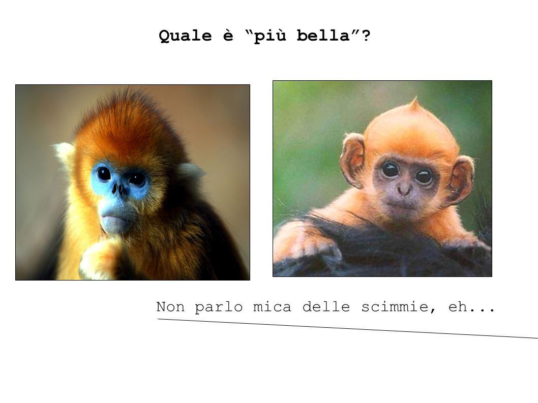 Quale è più bella Non parlo mica delle scimmie, eh...