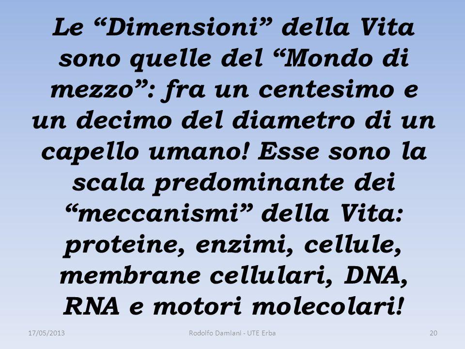 Le Dimensioni della Vita sono quelle del Mondo di mezzo : fra un centesimo e un decimo del diametro di un capello umano.