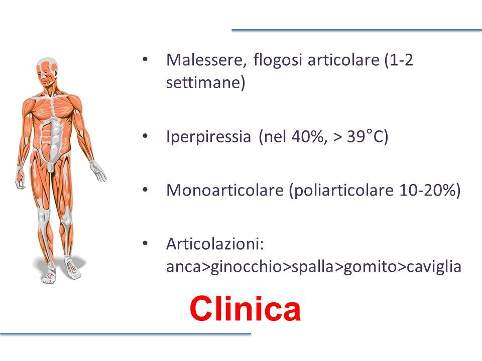 Clinica Malessere, flogosi articolare (1-2 settimane) Iperpiressia (nel 40%, > 39°C) Monoarticolare (poliarticolare 10-20%) Articolazioni: anca>ginocchio>spalla>gomito>caviglia