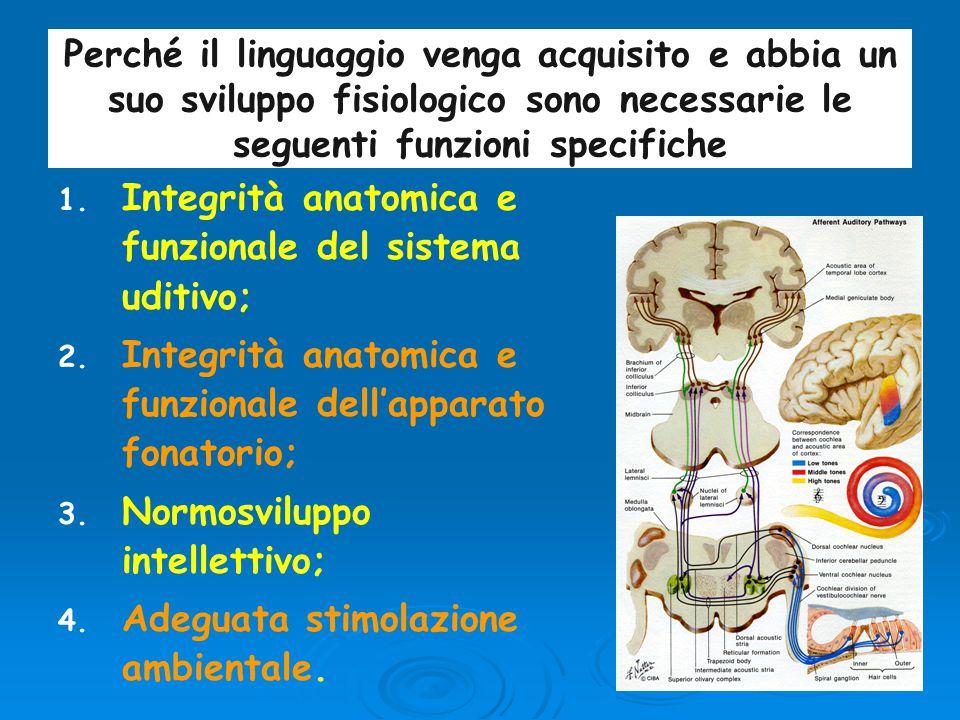 La strutturazione, la coordinazione e l'integrazione dei processi di sviluppo del linguaggio si completano entro i primi quattro- cinque anni di vita.