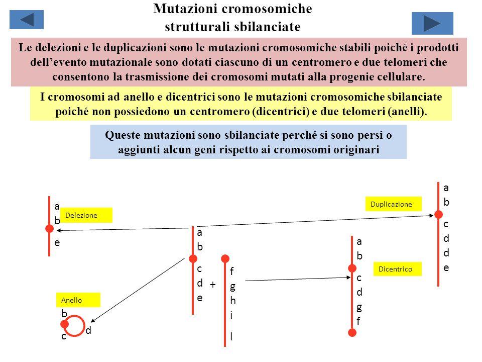 Mutazioni cromosomiche strutturali sbilanciate abcdeabcde bcbc d abeabe abcddeabcdde fghilfghil abcdgfabcdgf Delezione Duplicazione Anello Dicentrico