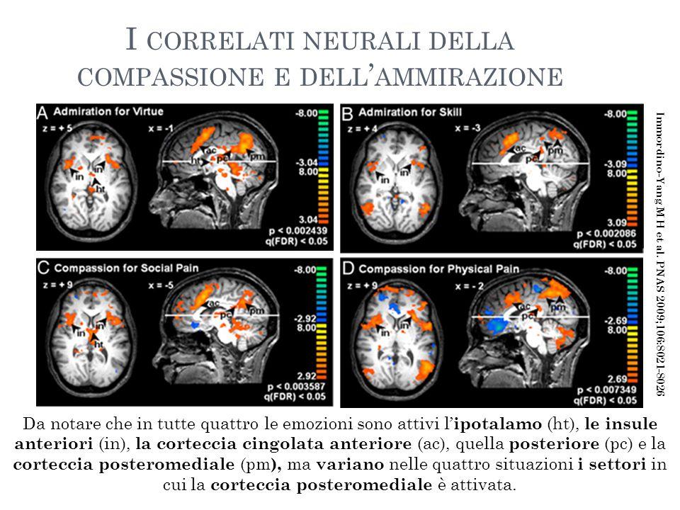 I CORRELATI NEURALI DELLA COMPASSIONE E DELL ' AMMIRAZIONE Da notare che in tutte quattro le emozioni sono attivi l' ipotalamo (ht), le insule anterio