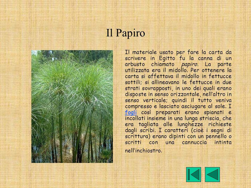 Il Papiro Il materiale usato per fare la carta da scrivere in Egitto fu la canna di un arbusto chiamato papiro. La parte utilizzata era il midollo. Pe