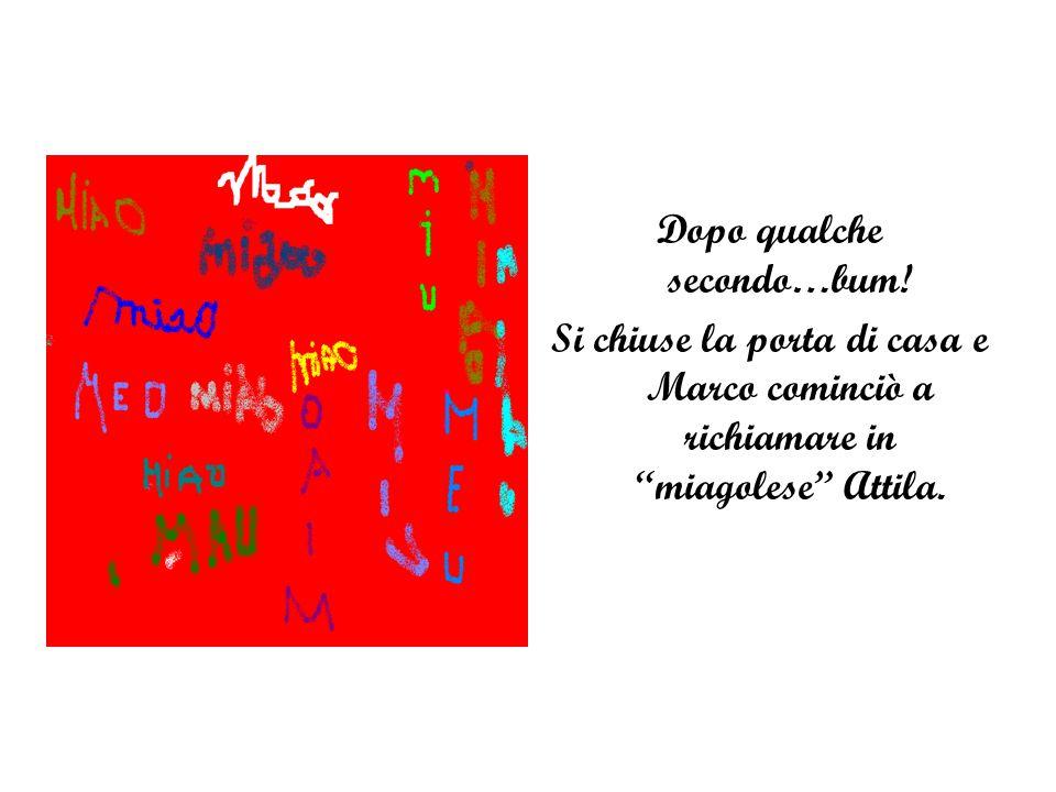 """Dopo qualche secondo…bum! Si chiuse la porta di casa e Marco cominciò a richiamare in """"miagolese"""" Attila."""