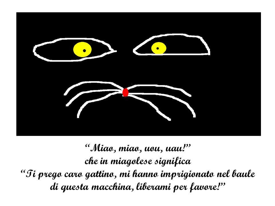 """""""Miao, miao, uou, uau!"""" che in miagolese significa """"Ti prego caro gattino, mi hanno imprigionato nel baule di questa macchina, liberami per favore!"""""""