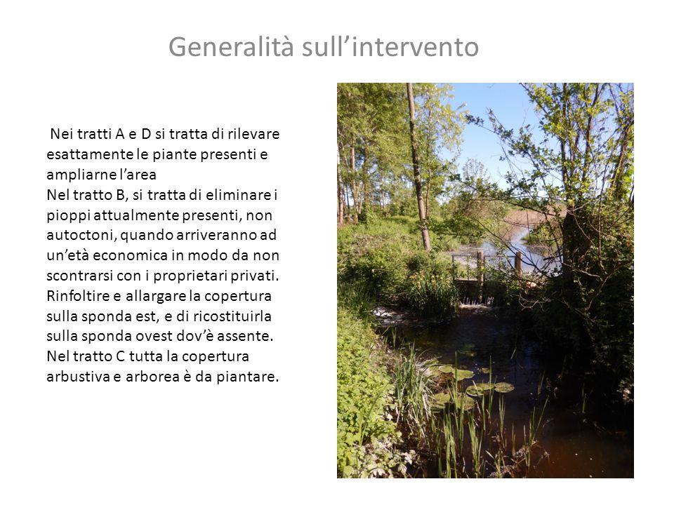 Generalità sull'intervento Nei tratti A e D si tratta di rilevare esattamente le piante presenti e ampliarne l'area Nel tratto B, si tratta di elimina