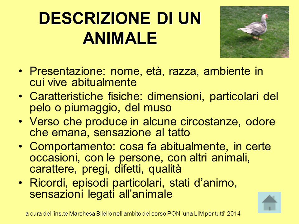DESCRIZIONE DI UN ANIMALE Presentazione: nome, età, razza, ambiente in cui vive abitualmente Caratteristiche fisiche: dimensioni, particolari del pelo