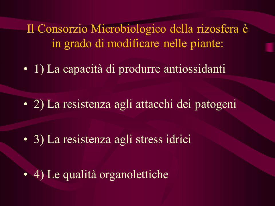 Il Consorzio Microbiologico della rizosfera è in grado di modificare nelle piante: 1) La capacità di produrre antiossidanti 2) La resistenza agli atta