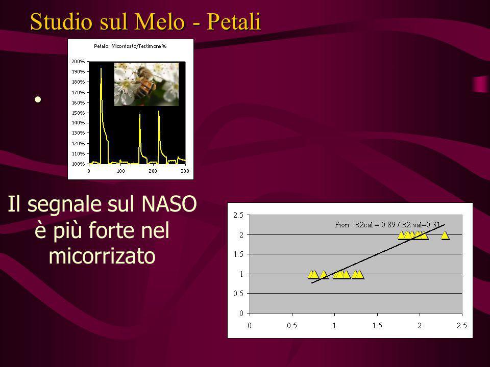 Studio sul Melo - Petali Il segnale sul NASO è più forte nel micorrizato