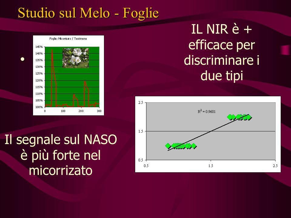 Studio sul Melo - Foglie Il segnale sul NASO è più forte nel micorrizato IL NIR è + efficace per discriminare i due tipi