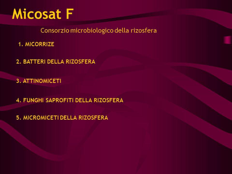 Micosat F Consorzio microbiologico della rizosfera 1. MICORRIZE 2. BATTERI DELLA RIZOSFERA 3. ATTINOMICETI 4. FUNGHI SAPROFITI DELLA RIZOSFERA 5. MICR
