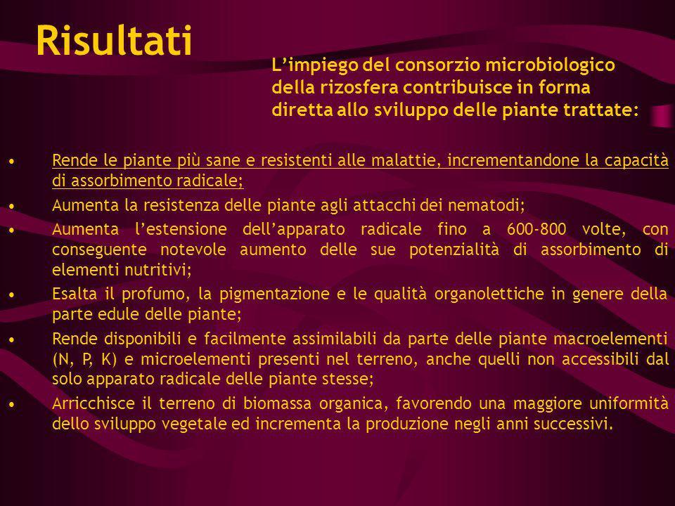 L'impiego del consorzio microbiologico della rizosfera contribuisce in forma diretta allo sviluppo delle piante trattate: Rende le piante più sane e r