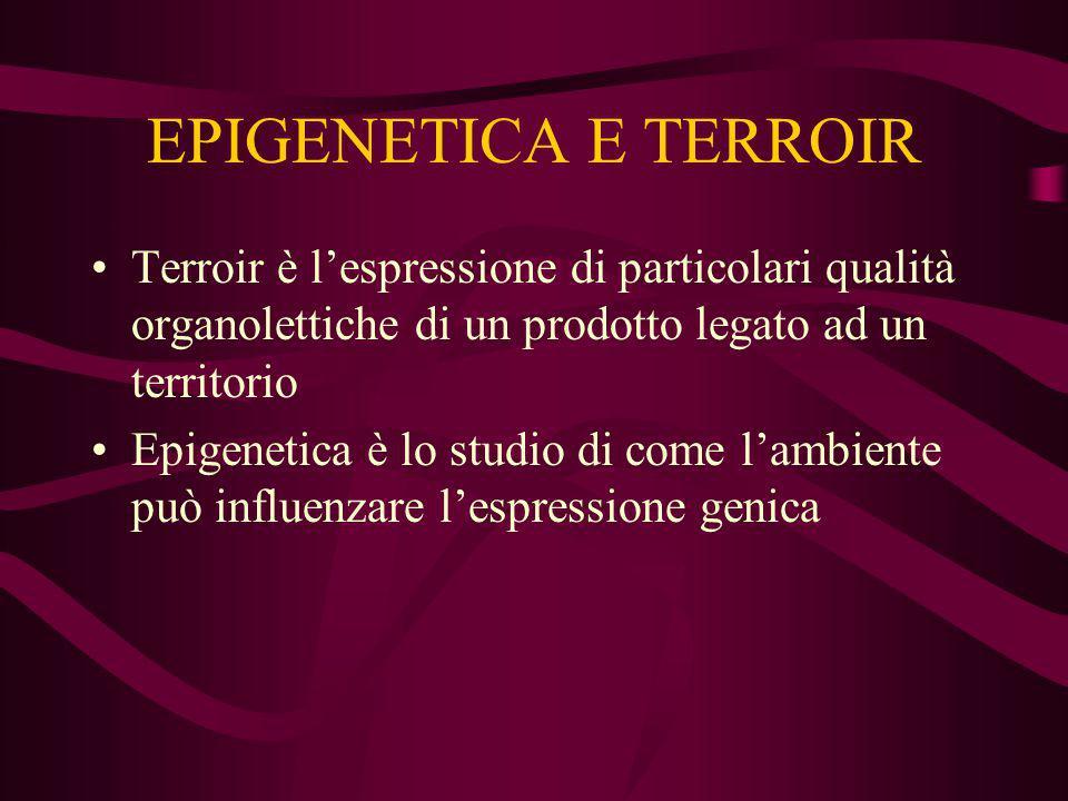 EPIGENETICA E TERROIR Terroir è l'espressione di particolari qualità organolettiche di un prodotto legato ad un territorio Epigenetica è lo studio di