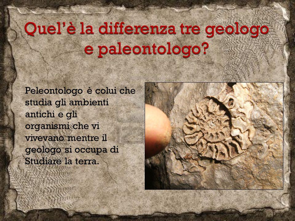 Peleontologo è colui che studia gli ambienti antichi e gli organismi che vi vivevano mentre il geologo si occupa di Studiare la terra.