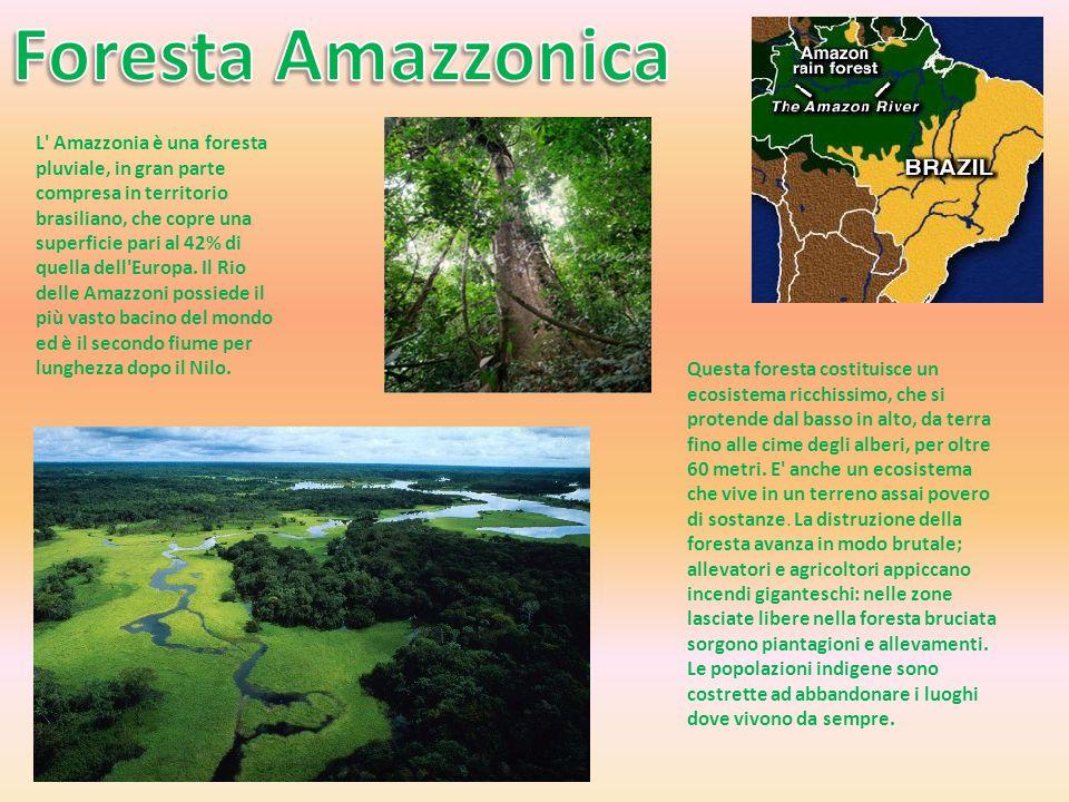 L' Amazzonia è una foresta pluviale, in gran parte compresa in territorio brasiliano, che copre una superficie pari al 42% di quella dell'Europa. Il R