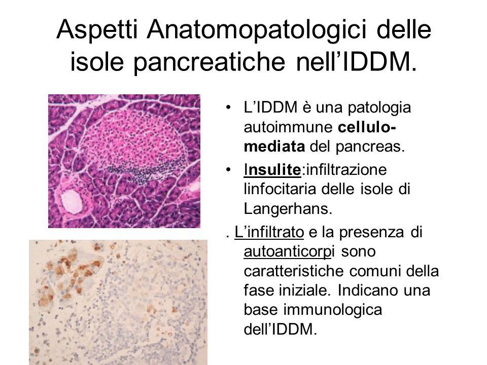 Aspetti Anatomopatologici delle isole pancreatiche nell'IDDM. L'IDDM è una patologia autoimmune cellulo- mediata del pancreas. Insulite:infiltrazione