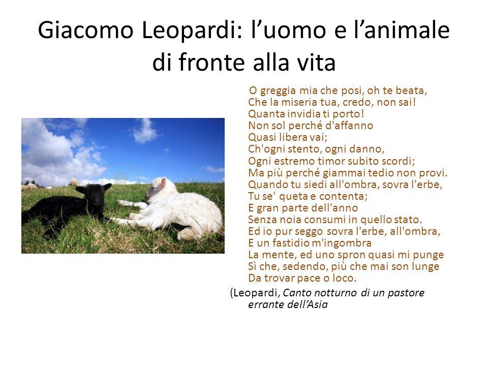 Giacomo Leopardi: l'uomo e l'animale di fronte alla vita O greggia mia che posi, oh te beata, Che la miseria tua, credo, non sai! Quanta invidia ti po