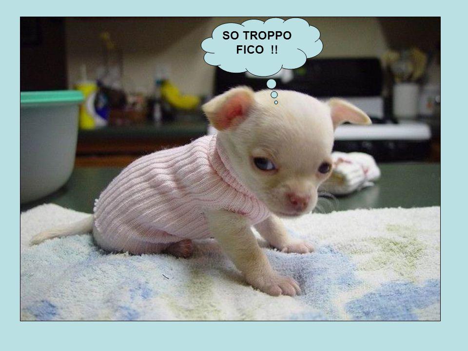 SO TROPPO FICO !!