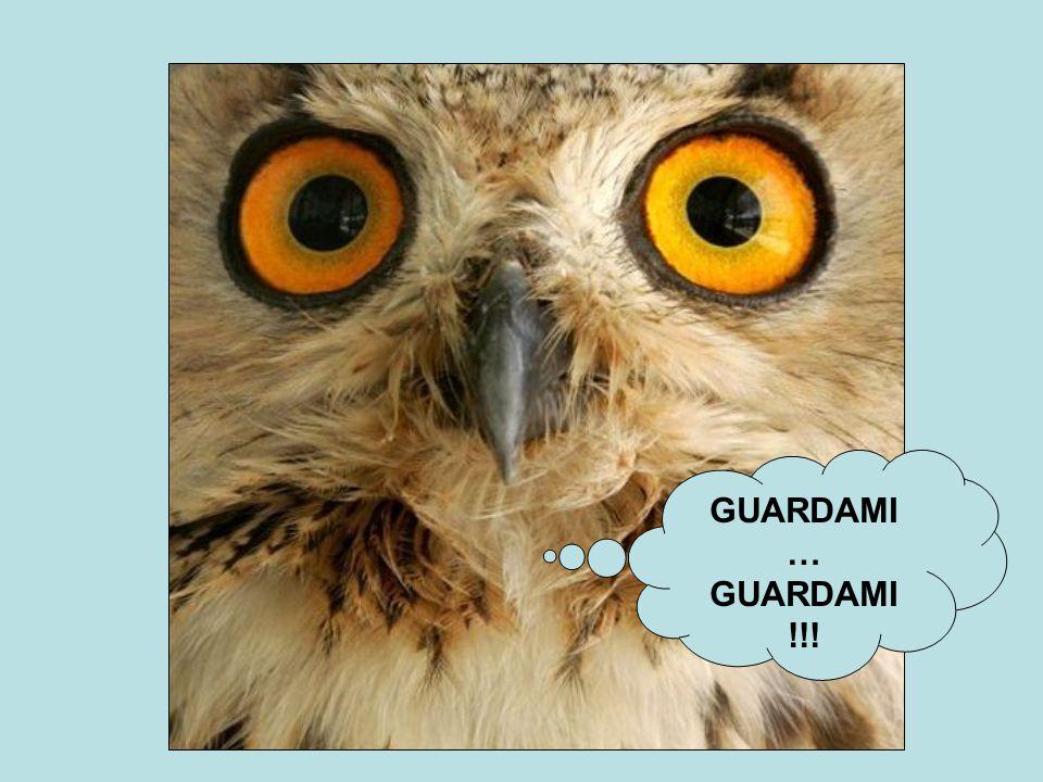 GUARDAMI … GUARDAMI !!!