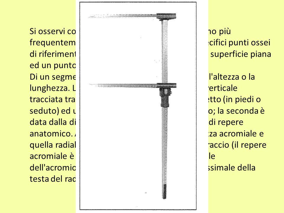 La barra dell antropometro è parallela alla faccia posteriore del braccio.