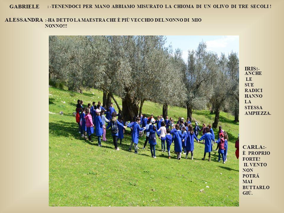 La raccolta delle olive a Venafro-Periodo ottocento- Museo olivo Oneglia-Fratelli carli LA RACCOLTA DELLE OLIVE IERI E OGGI: ANALOGIE E DIFFERENZE