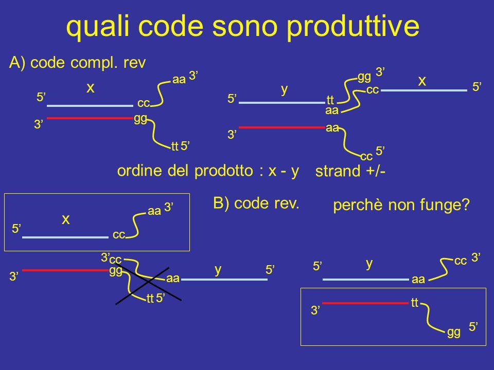x y quali code sono produttive 3' 5' cc aa cc 5' 3' cc x tt gg aa gg tt y 5' aa cc 3' 5' gg 3' tt 5' x 3' 5' cc aa 5' 3' gg tt ordine del prodotto : x - y cc y 5' A) code compl.